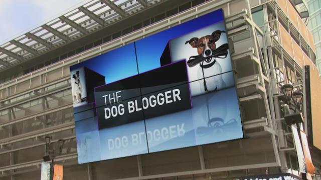 Dog Blog: Those annoying 'arfs.'