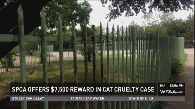 Cat cruelty case