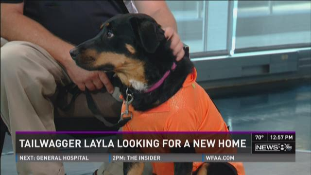 Tailwagger: Layla