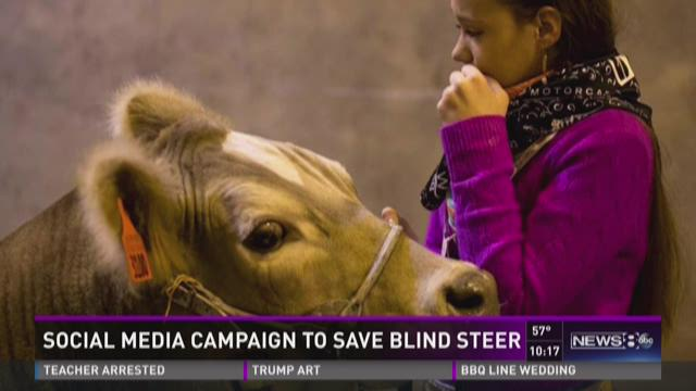 Social media campaign to save blind steer