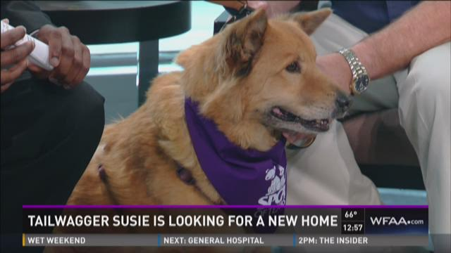 Tailwagger: Susie