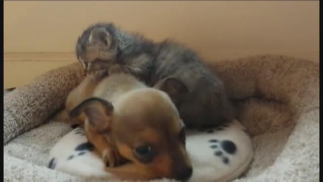 Puppy, kitten are best friends