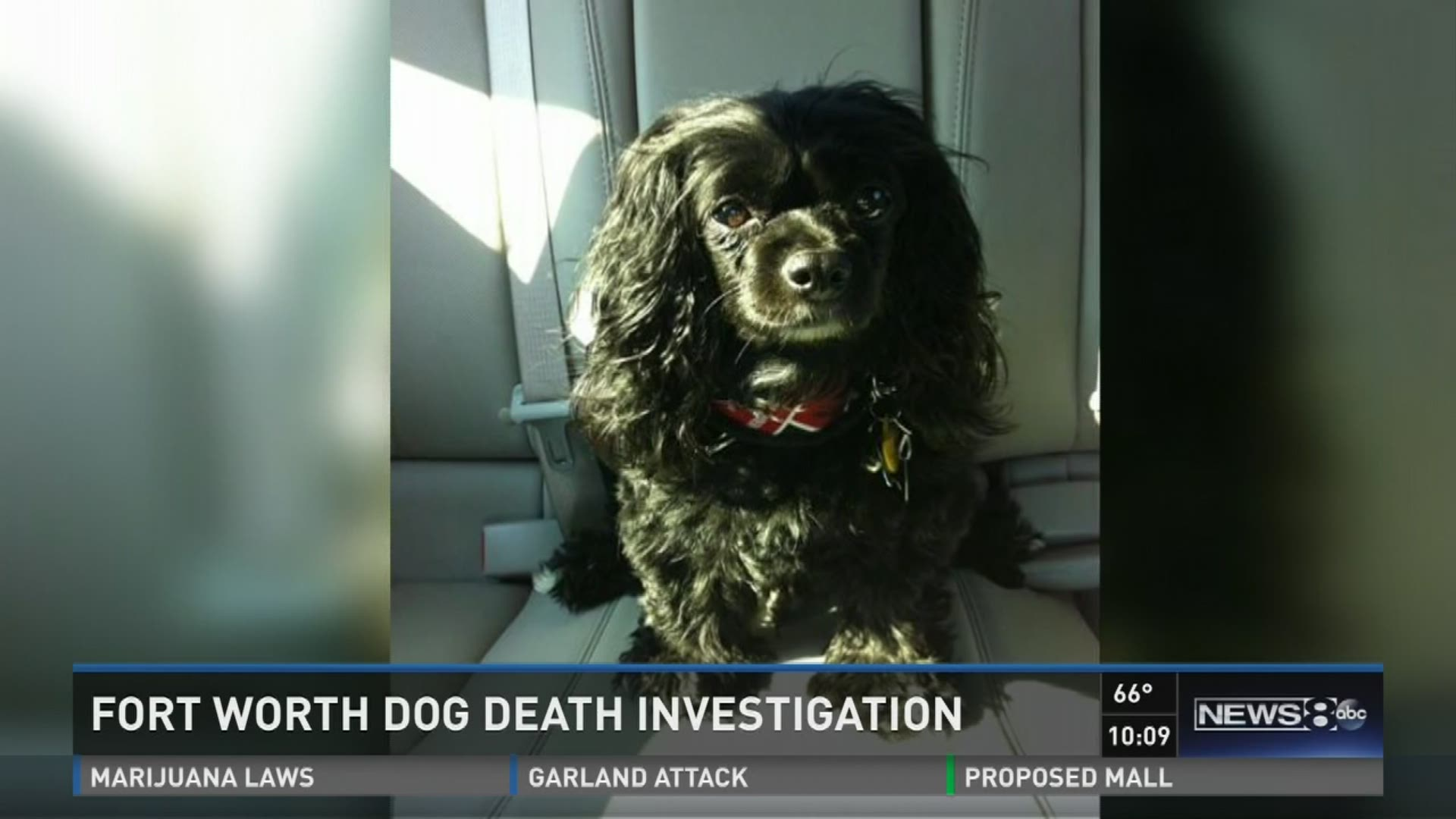 Fort Worth dog death investigation