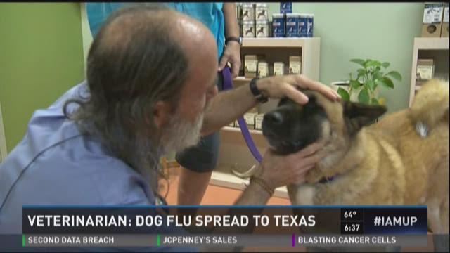 Dog flu spreading in Texas