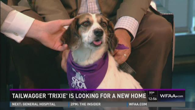 Tailwagger: Meet Trixie
