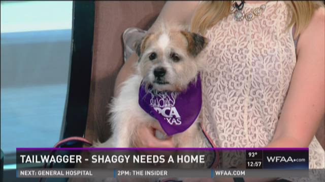 Tailwagger: Meet Shaggy