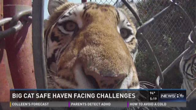 Big cat safe haven faces challenges