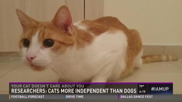 Researchers: Your cat doesn't care about you