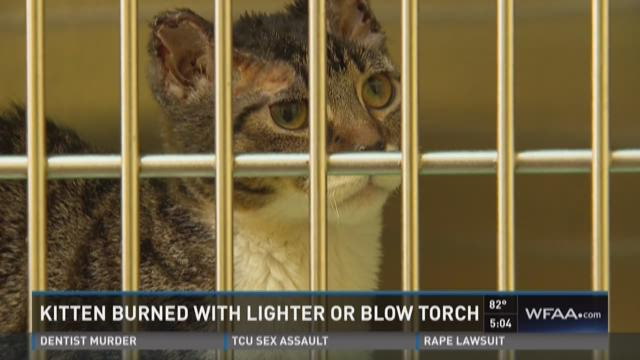 Kitten recovering after burned